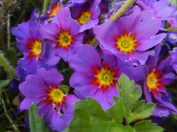 Fleurs du Parc paysager - Le Clos de la Risle