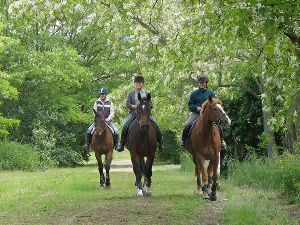 Equitation à Calleville