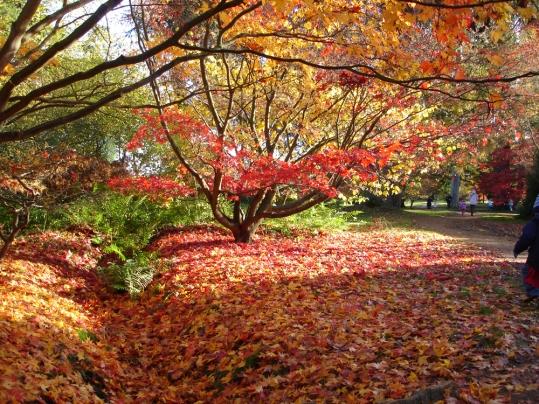 Version automnale - Arboretum d'Harcourt